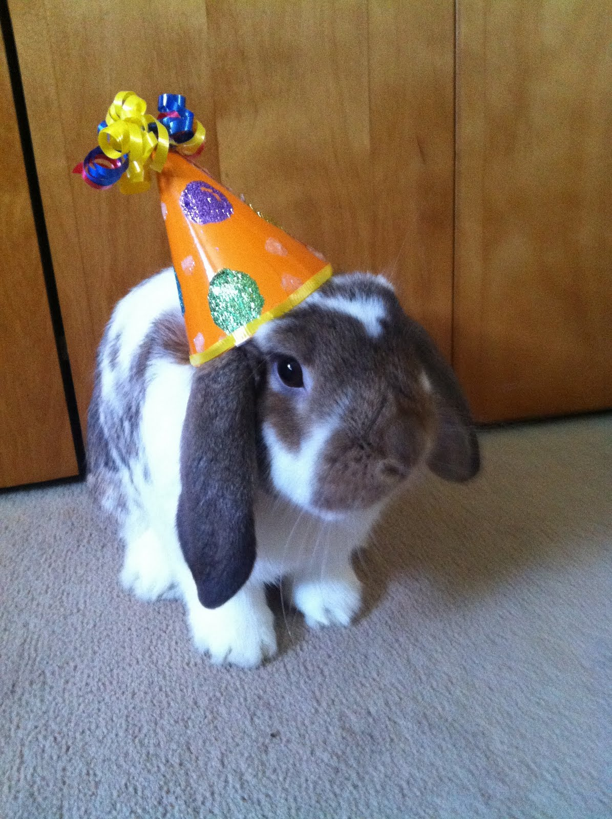 My Bunny's First Birthday
